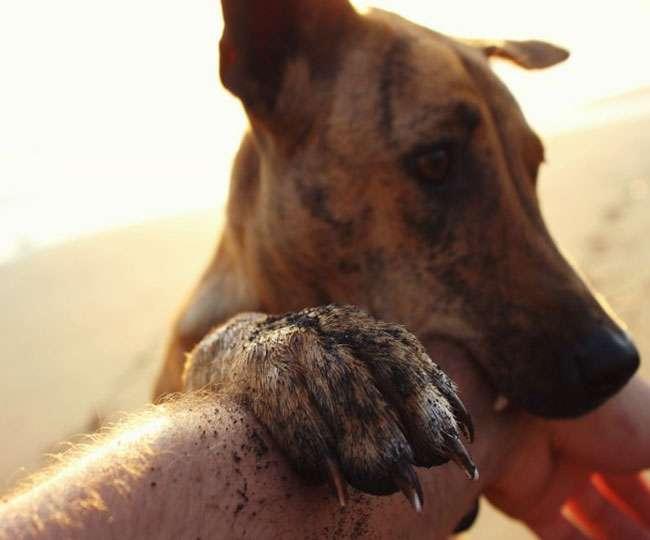 दर्दनाकः कुत्ते ने आदमी को मार डाला तो दूसरी घटना में कुत्ते को जिंदा खा गया शख्स