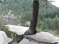 PICS: यहां चट्टान को फाड़कर जीवन के लिए संघर्ष कर रहे पैड़-पौधे