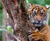 मानसून में वाइल्डलाइफ देखने की 8 जगहें, कहीं बाघ कहीं हाथी तो कहीं देखिए रंग-बिरंगी फूलों की घाटी