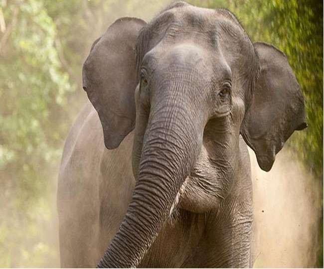 हाथी को पास से देखने की चाहत ने ले ली युवक की जान