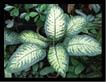 विदेशी पौधे बिगाड़ रहे है पर्यावरण और सेहत