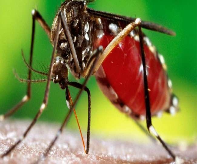 सिर्फ 30 सेकंड में हो सकेगी डेंगू की जांच, खर्च आएगा महज 15 रुपये