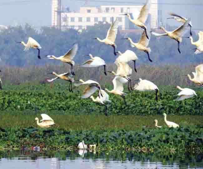 दिल्ली चिड़ियाघर की तर्ज पर ओखला पक्षी विहार
