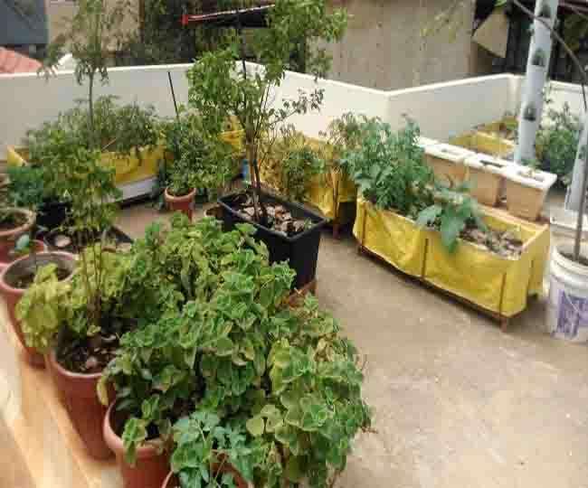 क्यों न आपका टेरेस भी हो हरा-भरा, लगाएं ये पौधे और बढ़ाएं खूबसूरती भी