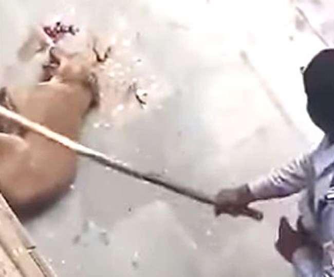 मेजर ने की कुत्तों की पिटाई, भुगतना पड़ गया मुकदमा