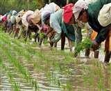 सरकार का वादा, हर हाल मे किसानों की आय की जाएगी दोगुनी