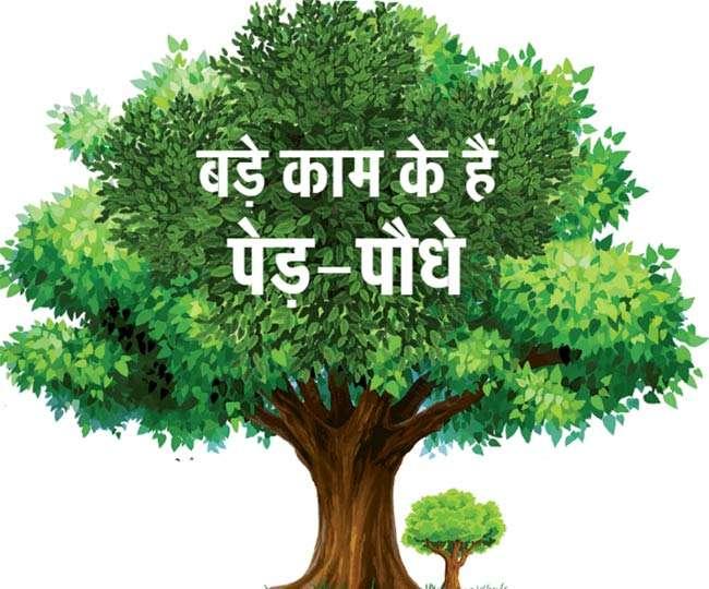 धरती की सुंदरता बढ़ाएंगे, जीवन दान भी देंगे; लेकिन इन पौधों से सावधान