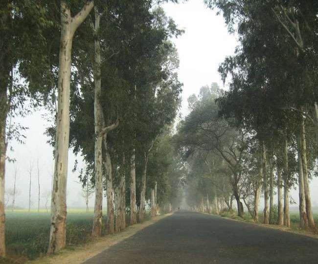 दस वर्ष पूर्व लिया पर्यावरण संरक्षण का प्रण, लगा चुके हैं 5 हजार से ज्यादा पेड़