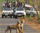 वाइल्ड लाइफ देखना है तो जाएं असम, काजीरंगा नेशनल पार्क और मानस टाइगर रिजर्व