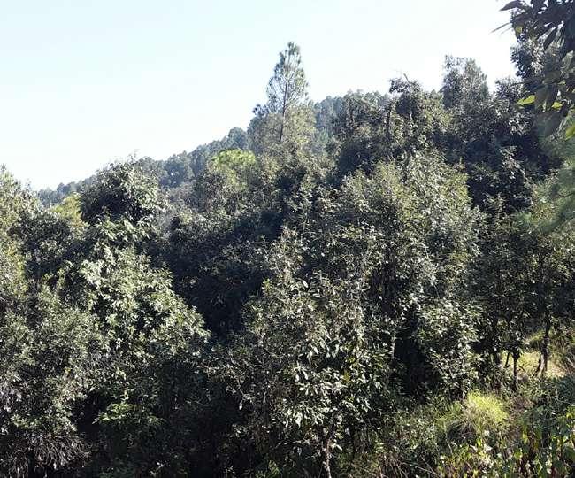 टिहरी में जन ने संकल्प लिया और लहलहा उठा जंगल