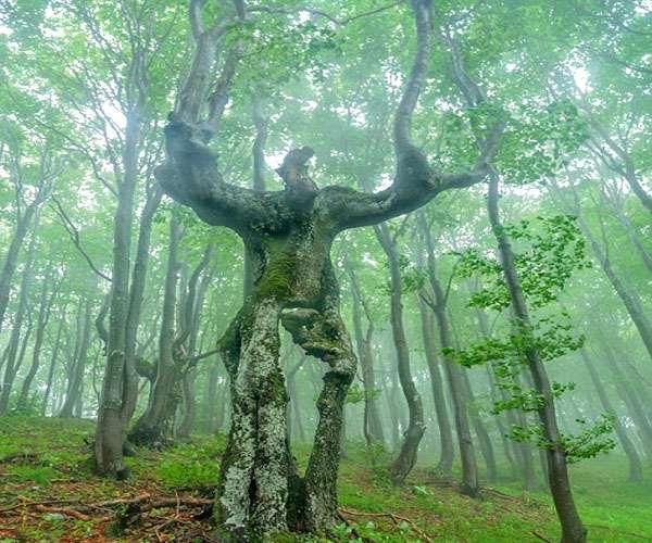 आखिर क्यों दिखता है ये पेड़ इंसानों जैसा