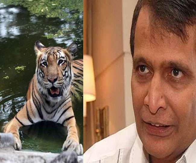 जब बांधवगढ़ में प्रभु का सामना हुआ बाघ से