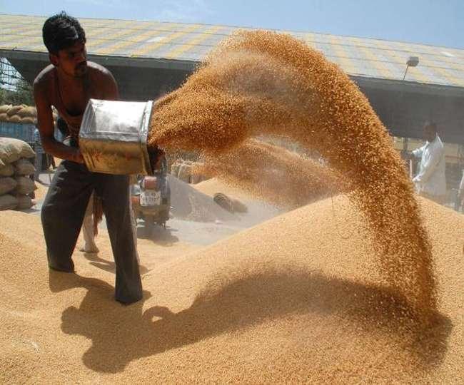 बीस दिनों में ही गेहूं खरीद पहुंची डेढ़ करोड़ टन के पार