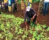पर्यावरण के प्रहरी बने यहां के एसपी, कर रहे पौधरोपण