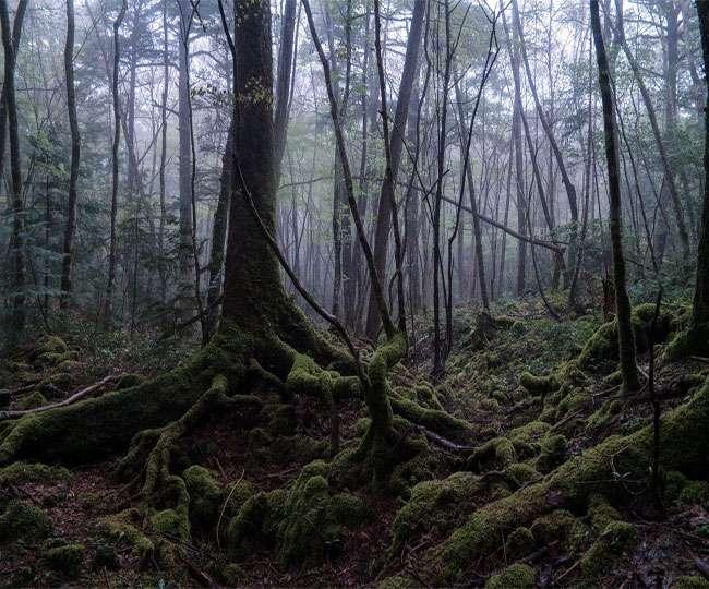 सच में नहीं देखा होगा ऐसा जंगल, जहां आत्महत्या करने जाते हैं लोग