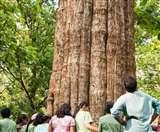 बच्चों के जन्म के साथ लगाए पेड़, इनसे पता लगाते हैं बच्चों की उम्र