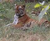नए रायपुर के जंगल सफारी में कर लें जानवरों से यारी, आइए शुरु करते हैं सवारी