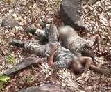 सुकमा हमला: हत्या के बाद महिला नक्सलियों ने 6 जवानों के काट लिए थे गुप्तांग