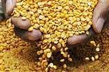 गेहूं और अरहर की दाल पर सरकार ने लगाया 10 फीसद का आयात शुल्क