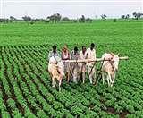 तकनीक से खेतों में उगा रहे सोना