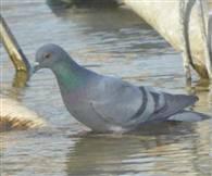तस्वीरों में देखें-गर्मी में राहत की तलाश करते पक्षी