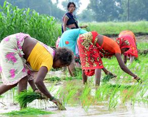 pics: बारिश के बाद किसानों के चेहरे पर आयी खुशी, शुरू हुई खेती-बारी