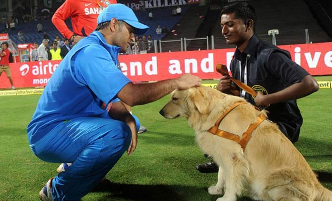 ms dhoni,ms dhoni dogs,indian cricketers dogs,ms dhoni pet,indian cricketers pets,dog lover cricketers,virat kohli