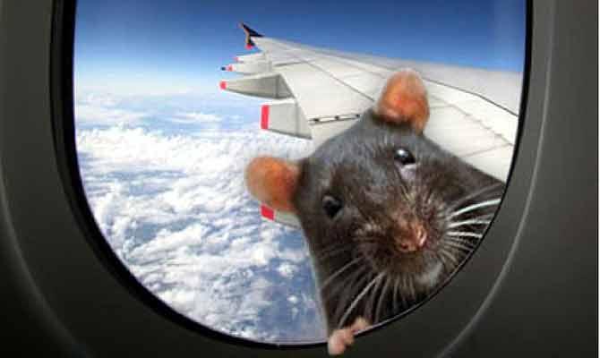 उड़ती हुई बिल्ली और चूहा देखा है कभी,  ये जनाब करा रहे हैं ऐसा ही कारनामा