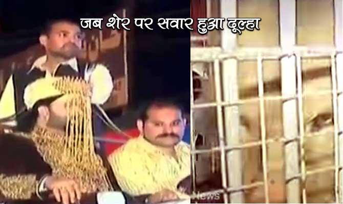 बब्बर शेर के ऊपर बैठकर लड़की के दरवाजे पहुंचा यह पाकिस्तानी दूल्हा!