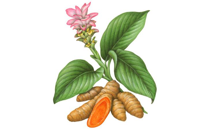 turmeric,mango taste turmeric,turmeric new varieties,raghupat singh,krishi pandit raghupat singh