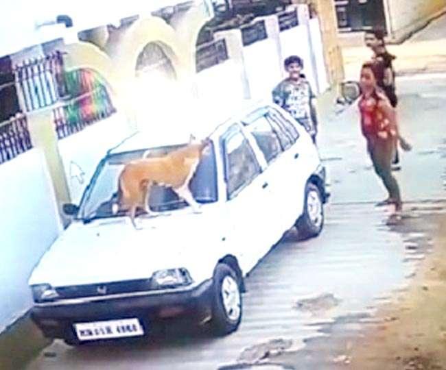 सिरफिरों ने कुत्तों को तड़पाकर मार डाला, मेनका गांधी तक पहुंचा विवाद
