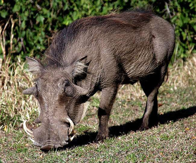 Students wounded in wild boar attack