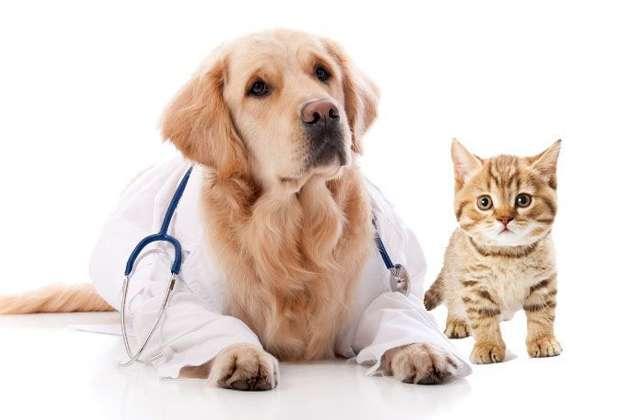 इंसानों का ही नहीं पालतू पालतू जानवरों का भी होता है बीमा, जानें इसके बारे में सबकुछ
