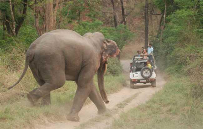 Image result for जिम कॉर्बेट राष्ट्रीय उद्यान