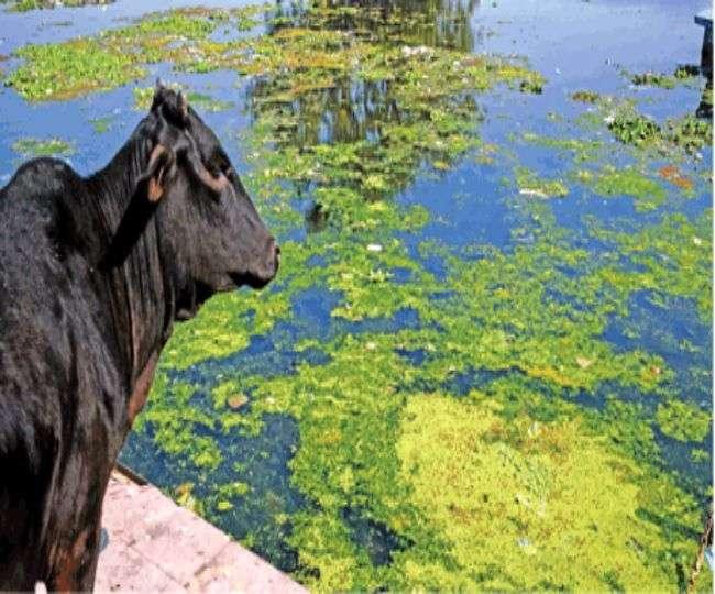 ढाई हजार करोड़ बहे फिर भी पानी काला, गोमती की इस बदहाली के ये हैं गुनहगार