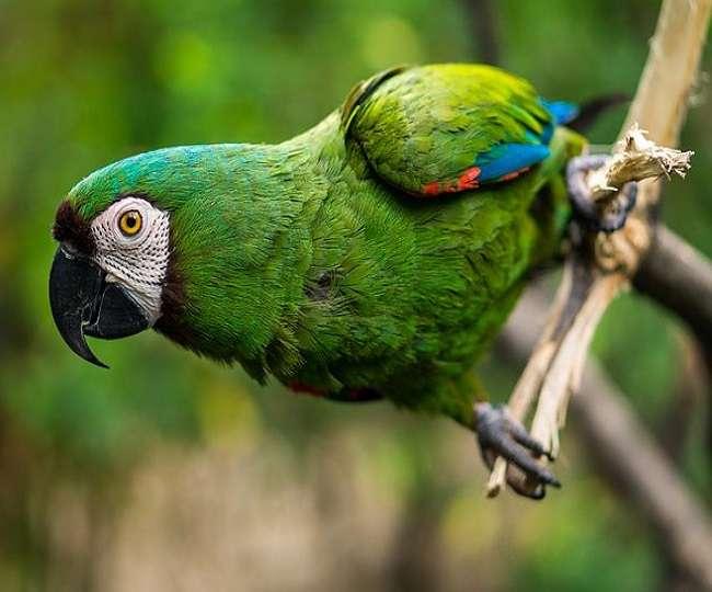 OMG! तोता है या 'खतरों का खिलाड़ी', कुछ अलग है इसकी कहानी