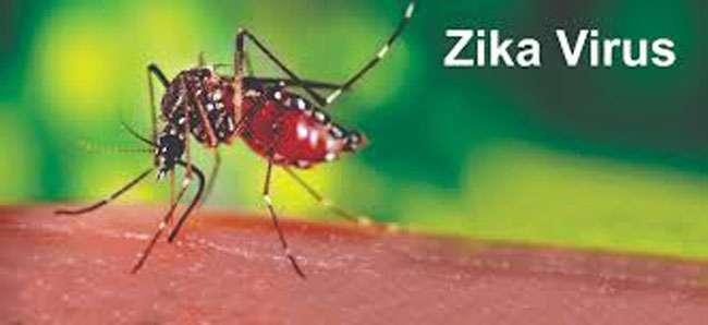Image result for राजस्थान के बाद गुजरात में फैला जीका वायरस