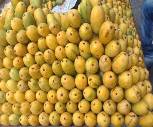 जहरीला हुआ फलों का राजा, स्वाद के साथ सेहत का बिगाड़ रहा मिजाज