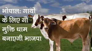 News Bulletin   05 PM   Bhopal: गायों के लिए गौ मुक्ति धाम बनाएगी भाजपा और अन्य खबरें