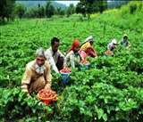 खेत खलिहानः मूल्य संवर्धन से किसान होंगे मालामाल, बढ़ जाएगी कमाई