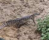 तालाब में मछली पकड़ने गया था, जाल में फंस गया मगरमच्छ ; फिर.. Gorakhpur News