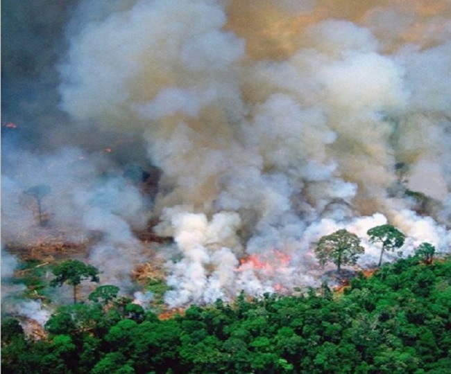 Bollywood Celebs Raise Concern On Amazon Forest Fire Question