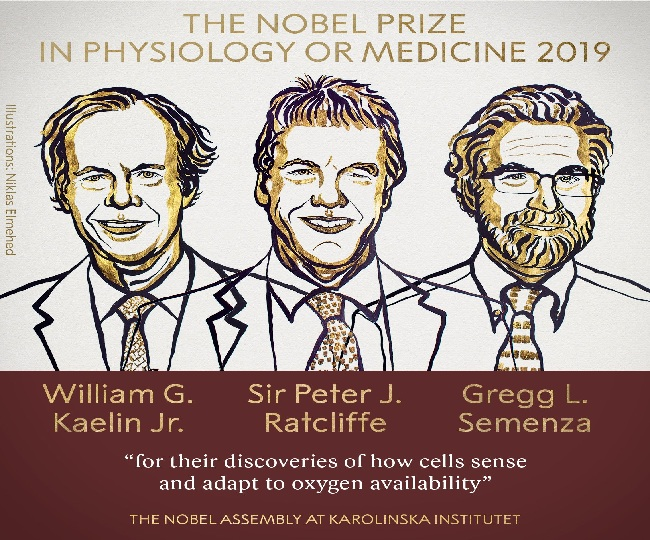 Kaelin Jr, Ratcliffe and Semeza jointly win 2019 Nobel Prize for medicine