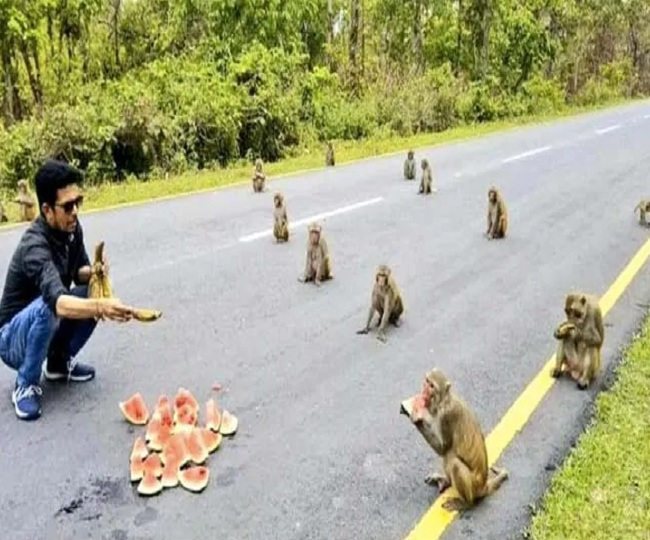 Kiren Rijiju's post showing monkeys practicing social distancing while eating leaves netizens amused | In Pics