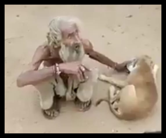 Video of beggar feeding stray dogs from his plate goes viral, Twitter hails his compassion | Watch
