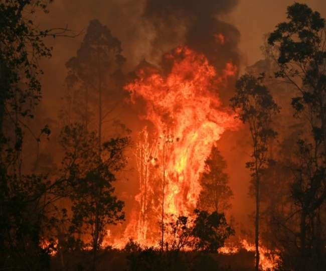 Nature slaughters: For 2 years, Australia continues to combat forest fires with '3 billion animals affected'