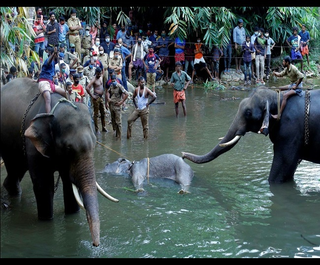 Another Kerala elephant died in April after eating cracker-filled food, body was found with broken jaw