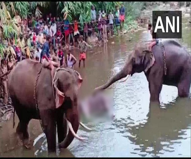 Kerala Elephant Killing: One arrested for allegedly feeding cracker-filled pineapple to pregnant elephant in Palakkad