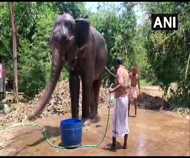 'Like my children': Man in Bihar transfers his property to elephants, internet hails him as 'hero'