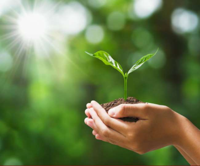 World Environment Day 2020: List of indoor plants that will help in purifying the air inside your house